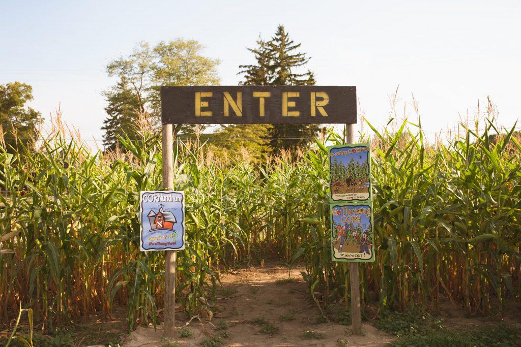 Robinettes Corn Maze